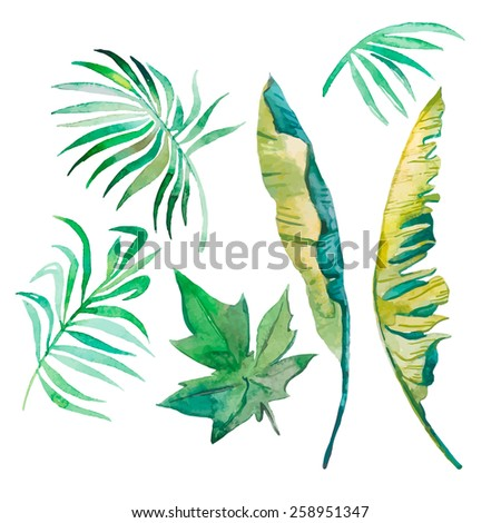 Watercolor palm leaves, banana leaves,papaya leaves . Set of tropical leaves. - stock photo