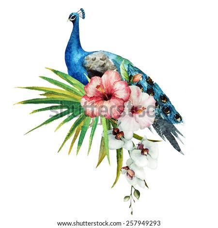 watercolor, peacock, magnolia, flowers - stock photo