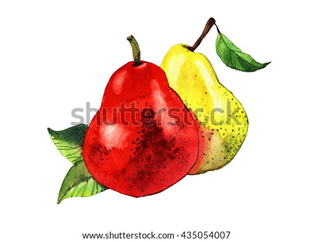 watercolor pear hand painted illustration isolated on white background - stock photo