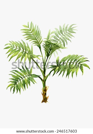 Watercolor pot plant palm isolated on white.  - stock photo