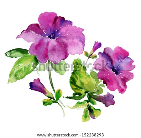 Watercolor purple petunia flowers - stock photo