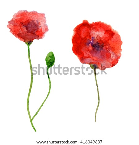 Watercolor red Poppy flowers, bud, hand drawn botanical illustration isolated on white background, Floral design elements, Can be used for cards, invitation or wedding design,cosmetic, beauty salon - stock photo