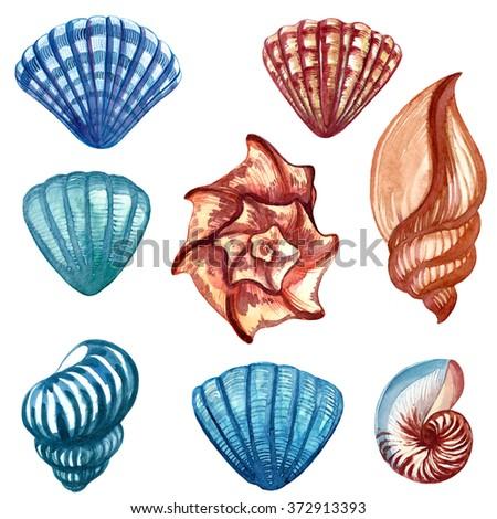 Watercolor sea shells - stock photo