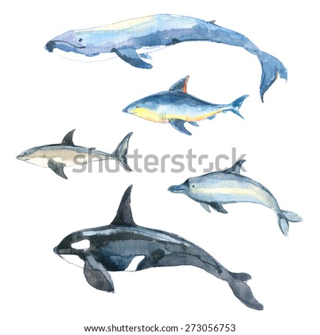 Watercolor set of sea animals. Shark, whale, killer whale and dolphin on white background. - stock photo
