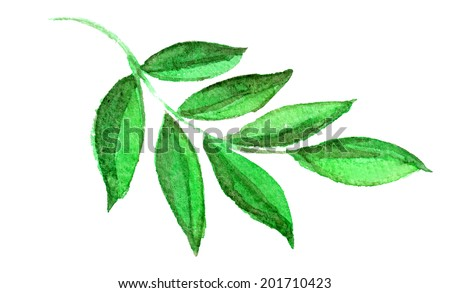 watercolor sketch of a branch with green leaves on a white background - stock photo