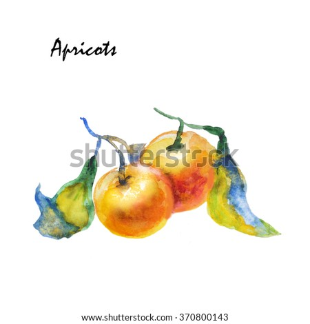 Watercolor sprig with leaves and apricots. Food, logo, template. Element for pattern, background, design menu, postcards, brochures. Isolated fruit. Vegetarian food. Sweet light dessert. Healthy food. - stock photo
