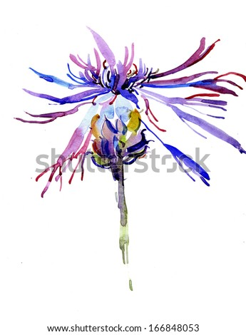 Watercolor thistle flower - stock photo