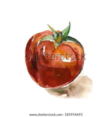 Watercolor Tomato - stock photo