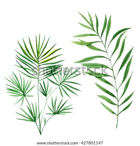 Watercolor tropical leaves - stock photo