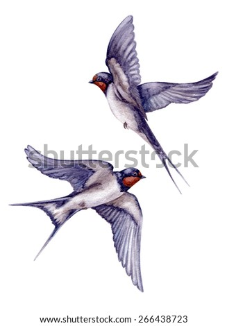 Watercolor two  flying swallows isolated on white background. - stock photo