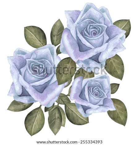 Watercolor vintage blue roses flowers with green leaves closeup isolated on a white background. Hand painting - stock photo