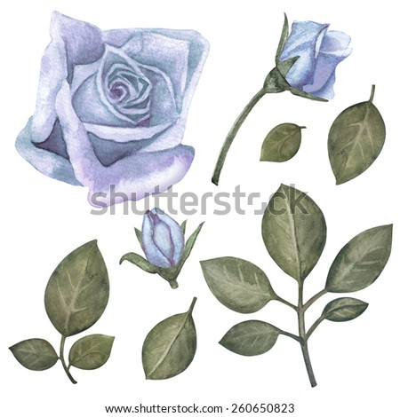 Watercolor vintage set blue roses flowers, buds, green leaves closeup isolated on a white background. Hand painting on paper - stock photo