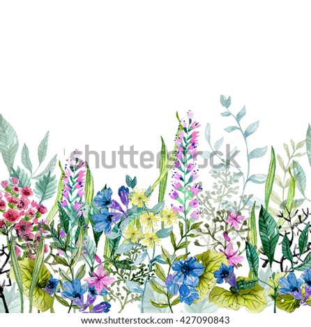 Watercolor wild herbs and flowers over white - stock photo