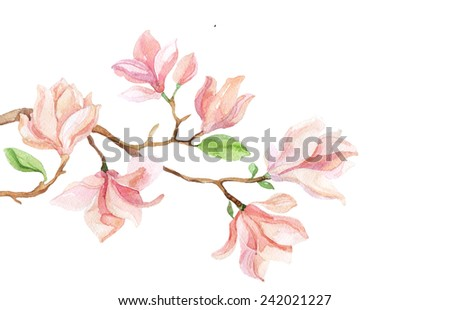 Watercolor with Magnolia flower. Hand painted illustration - stock photo