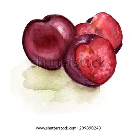 Watercolour plums on white background - stock photo