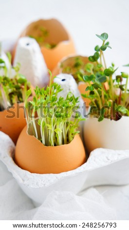 watercress salad and in eggshells - Easter card - stock photo