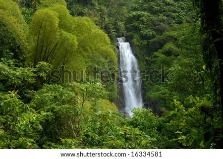 Waterfall in rainforest jungle - stock photo