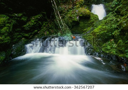 Waterfall with no name in Oregon amidst lush green moss and plants. - stock photo