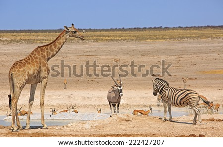Waterhole in Etosha with Giraffe, Gemsbok Oryx & Zebra in National Park - stock photo