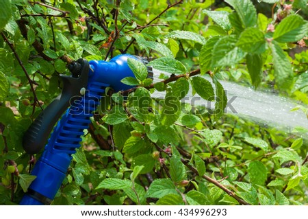 Watering a garden hose in the bush cherry - stock photo