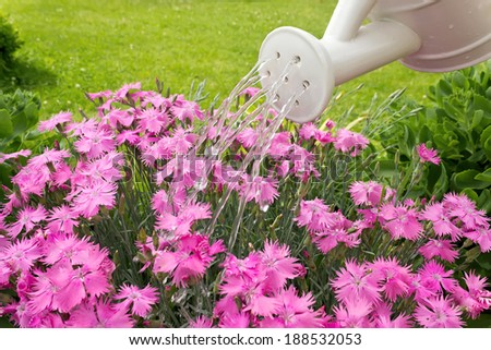 Watering can pouring water on the flowers - stock photo