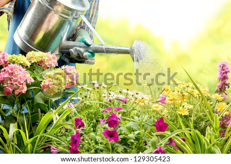 watering flowers in garden centre - stock photo
