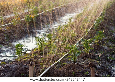 Watering flowers in the field - stock photo