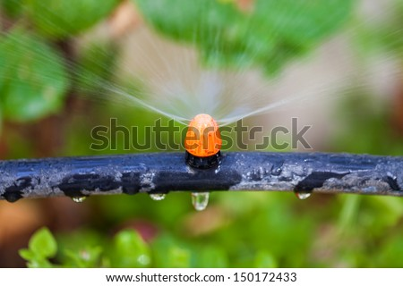 Watering plants and grass by nozzle, closeup - stock photo