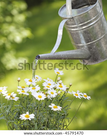 Watering white flowers with metallic watering can - stock photo