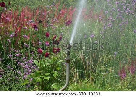 Watering with sprinklers - stock photo
