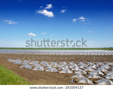 Watermelon beds covered with plastic foil ready for planting - stock photo