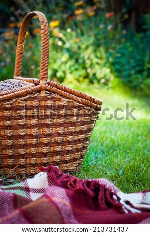 Wattled Basket on a Summer Green Background, selective focus - stock photo