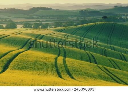 Wavy fields in Tuscany at sunrise, Italy - stock photo