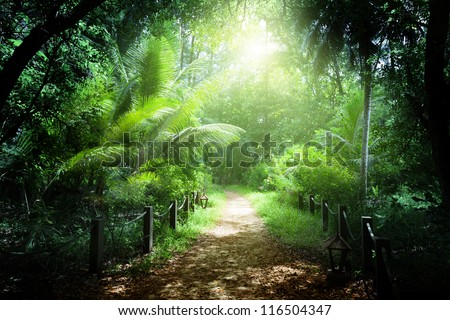 way in jungle of Seychelles islands - stock photo