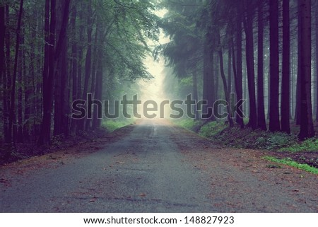way in the fog - stock photo