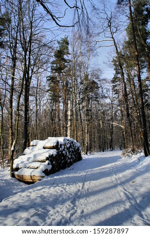 Way through a winter forest, at the wayside is a large stack of logs; sunny day with light and shadow/Wood pile in winter forest - stock photo