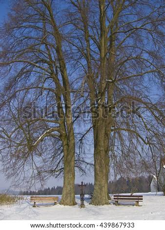wayside cross between two big oaks in winter condition - stock photo