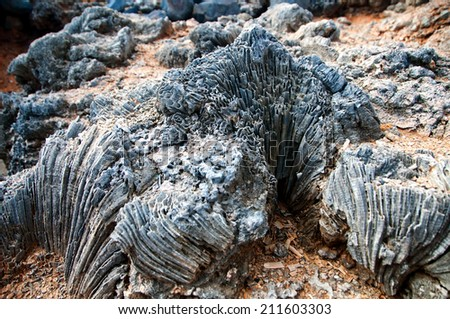 Weathered Coastal Rock Formation Showing Resistant Coral