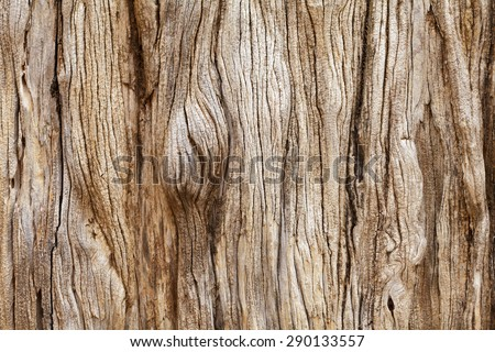 Weathered tree trunk textured background - stock photo