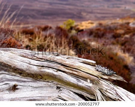 Weathered wood on a moorland - stock photo
