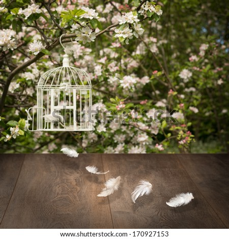 Weathered wooden timber with feathers and birdcage in background - stock photo