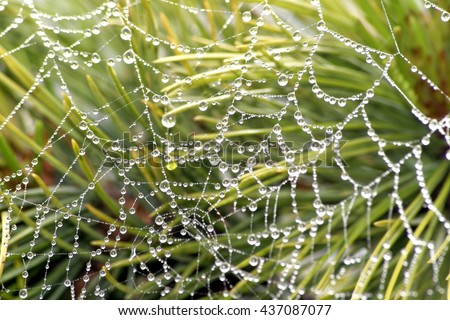 web in drops of dew - stock photo