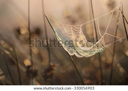 Web of a spider against sunrise in the field covered fogs  - stock photo