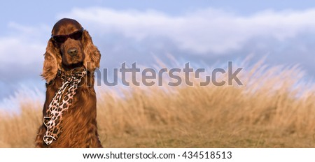 Website banner of a funny Irish Setter dog with copy space - stock photo