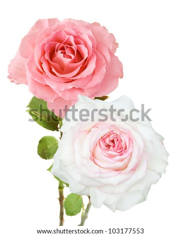 Wedding bunch of rosy and white roses isolated on white - stock photo