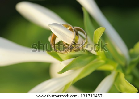 wedding golden rings hanging on lily's bud - stock photo