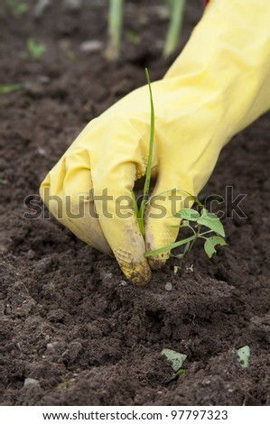 weed control - stock photo