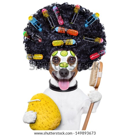 wellness dog with hair rollers and sponge - stock photo