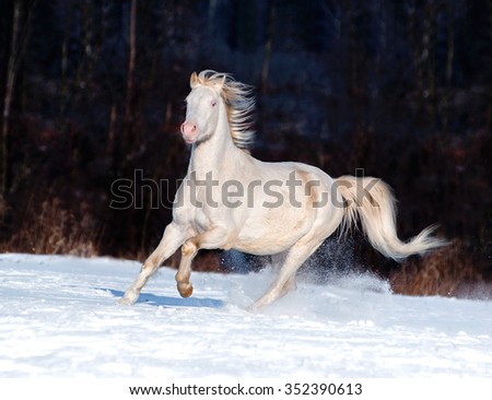 welsh pony and dog talking - stock photo