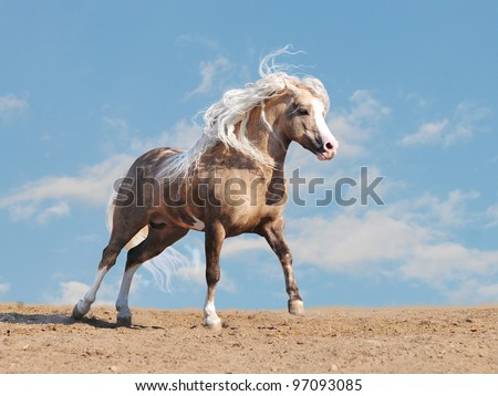 welsh pony in a desert - stock photo